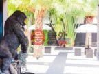 泰国普吉府普吉的房产,编号21472644
